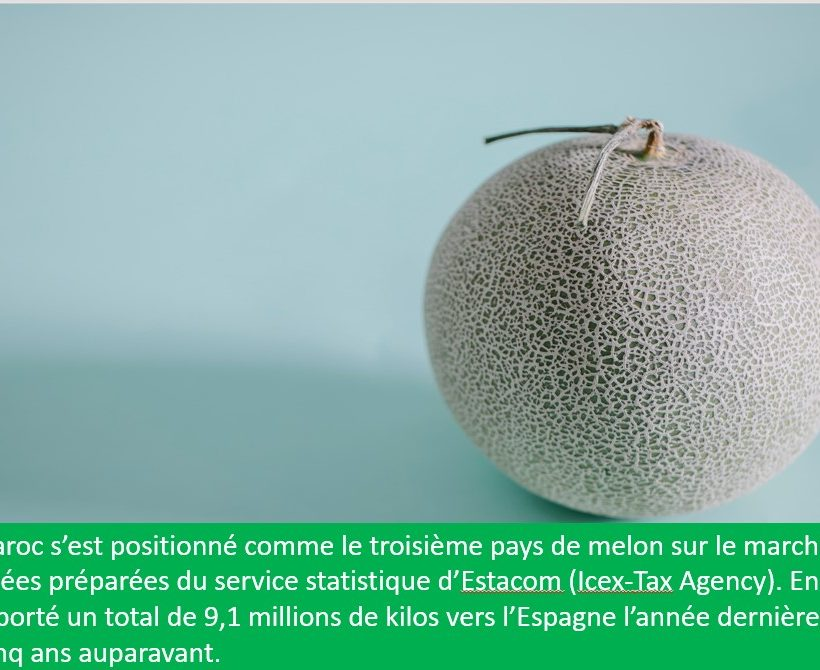 Le Maroc était le troisième fournisseur en melon de l'Espagne en 2020