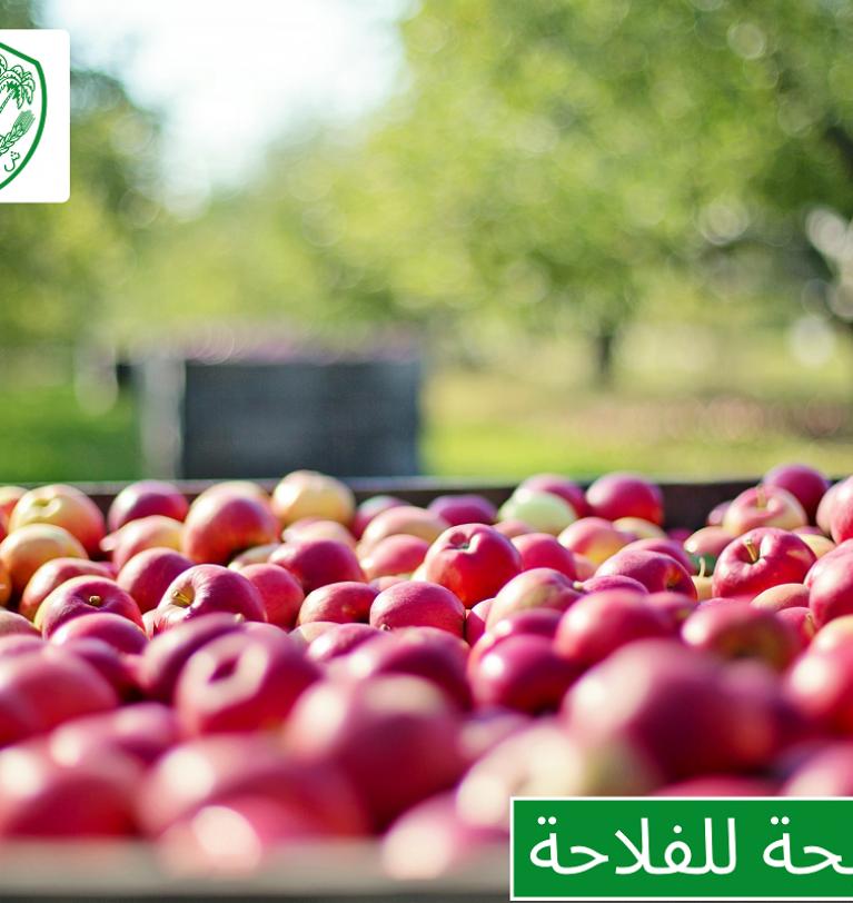 Conseil aux agriculteurs: parcelle de pommier à Dayet Aoua-Ifrane