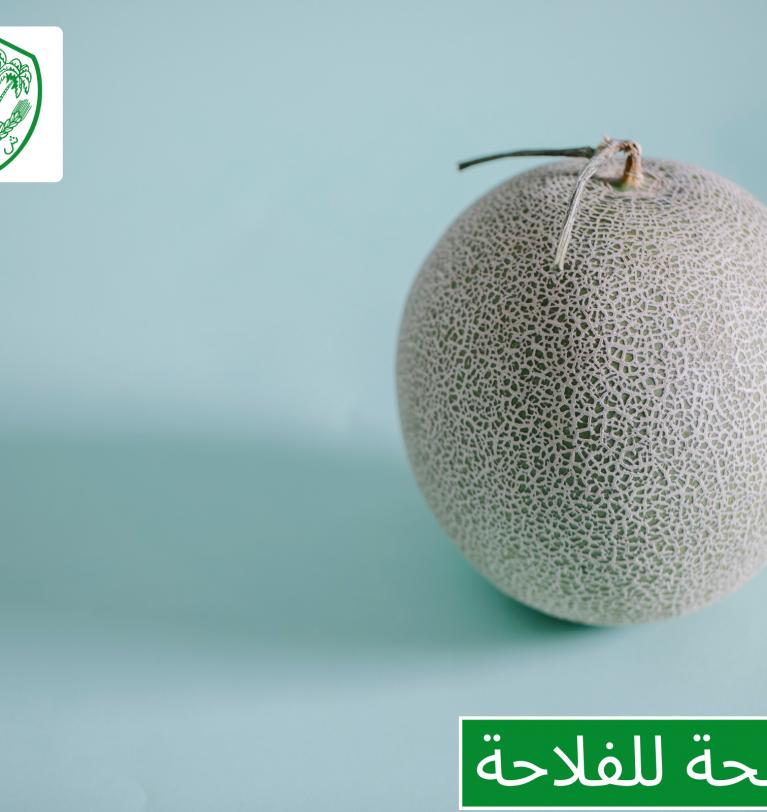Conseil aux agriculteurs: parcelle de melon dans la région de Sidi Kacem