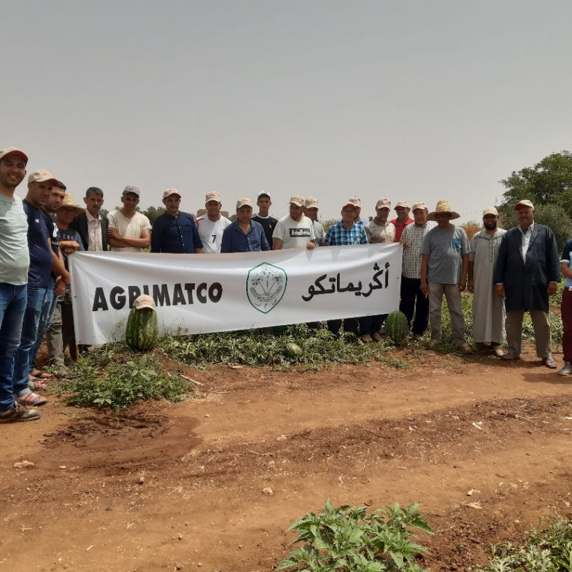 Visit of a very beautiful plot of the SENTINEL watermelon variety in the Béni Mellal region